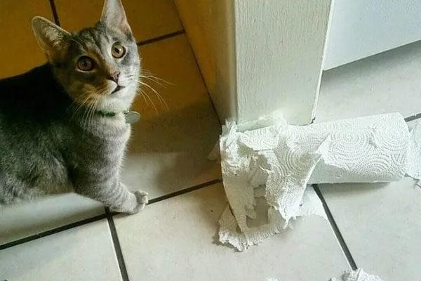Não é um brinquedo?