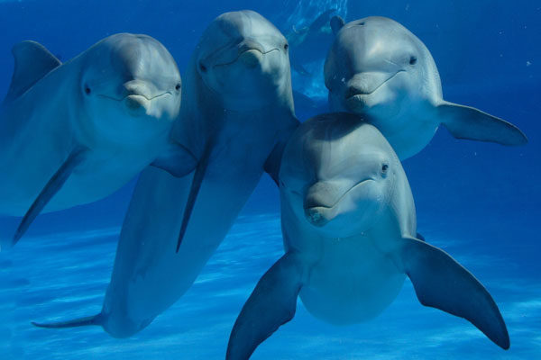 Os golfinhos têm nome