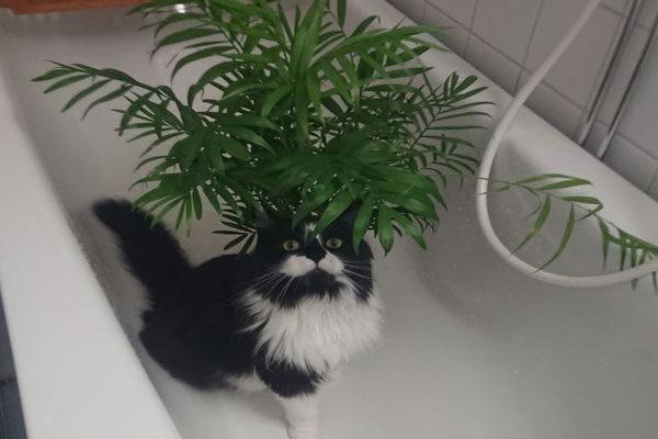 Sou uma planta