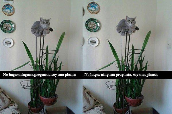 Sou uma planta...
