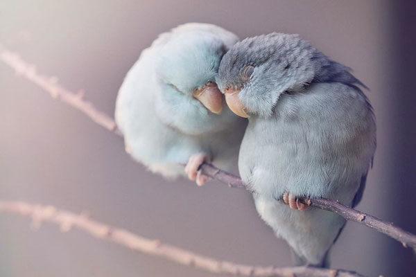 Amorosos