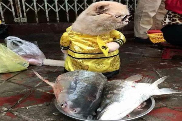 Vendedor de peixe