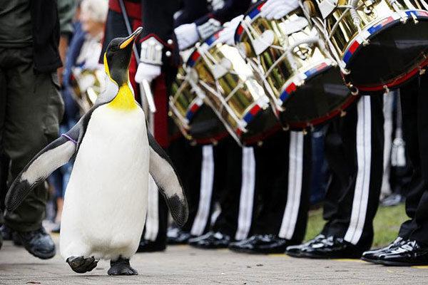 Um pinguim importante