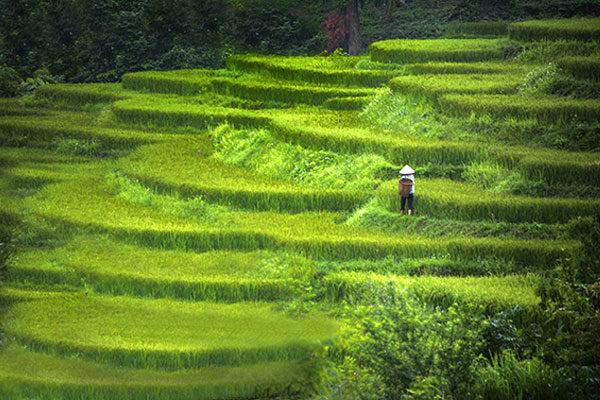 Terraços de arroz, Bali, Indonésia