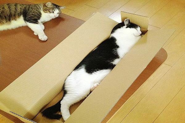 Agora é uma caixa